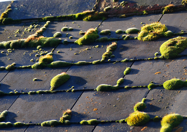 close-up of moss growing on roof