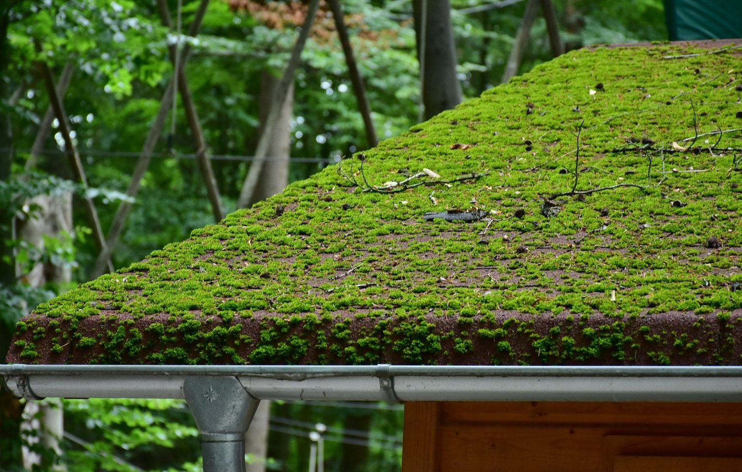 roof with moss growing on it